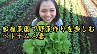 家庭菜園で野菜作りを楽しむベトナム人妻