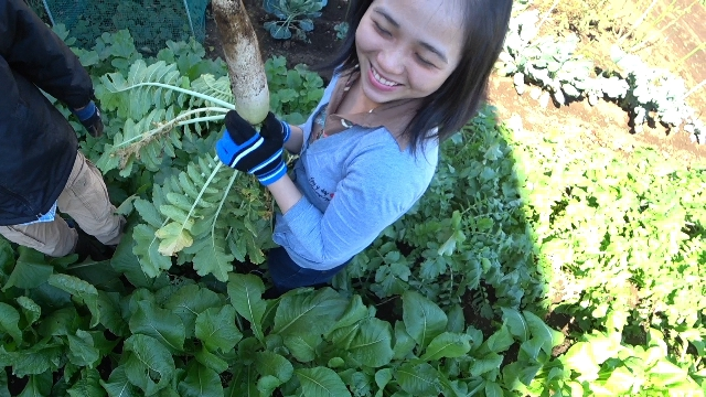 家庭菜園をやりたい妻と私のお父さんの利害関係が一致した